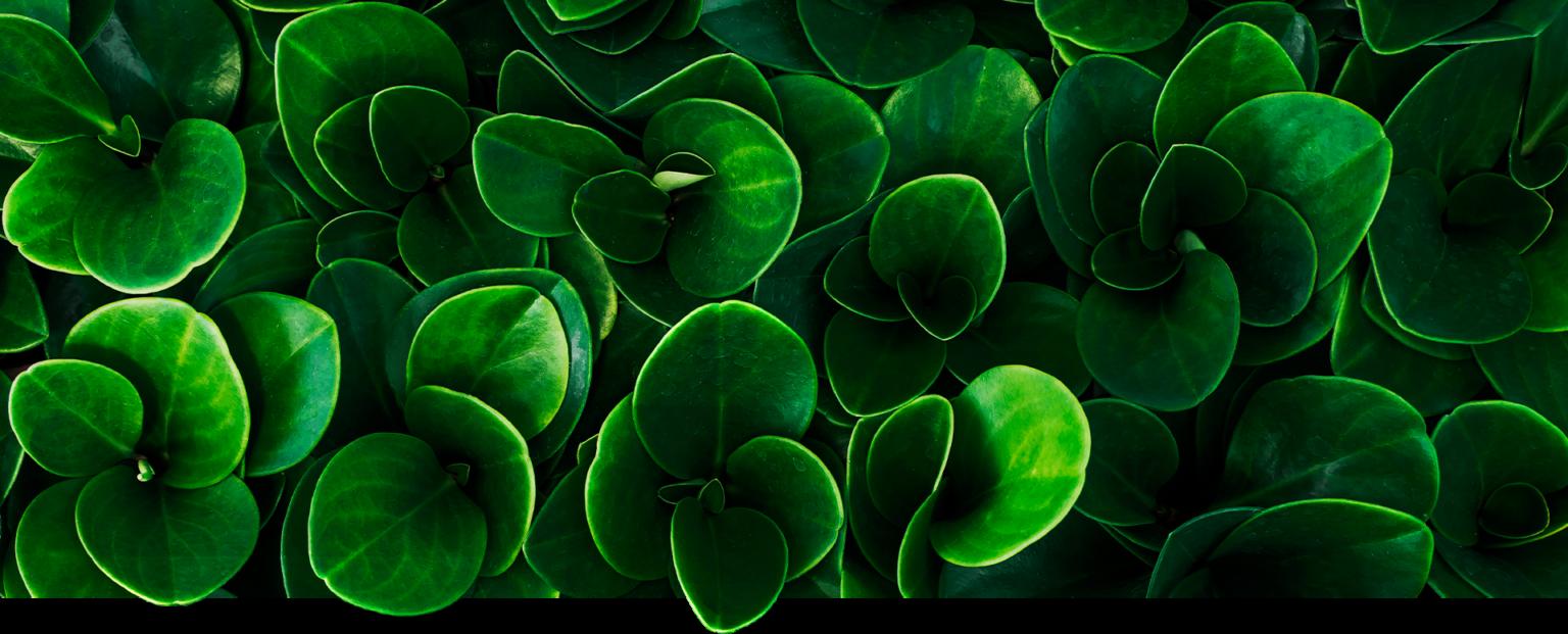 pot planten van der eijk
